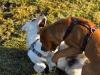 chulo-mar-2012-118