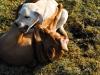 chulo-mar-2012-121