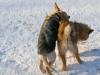 chulo-feb-2012-114
