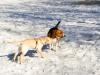 chulo-feb-2012-161