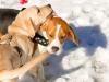 chulo-feb-2012-164