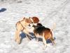 chulo-feb-2012-170