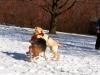 chulo-feb-2012-175