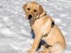 chulo-feb-2012-211