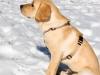 chulo-feb-2012-213