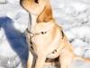 chulo-feb-2012-216