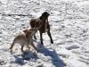 chulo-feb-2012-226