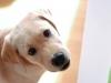 chulo-feb-2012-29