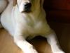 chulo-feb-2012-3