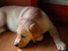 chulo-feb-2012-30