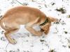 chulo-feb-2012-6
