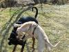 chulo-mar-2012-211